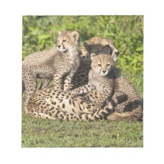 Africa. Tanzania. Cheetah mother and cubs Notepad