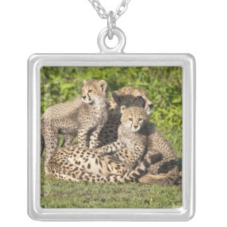 Africa. Tanzania. Cheetah mother and cubs Square Pendant Necklace