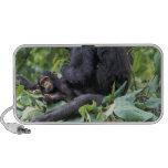 África, Tanzania, chimpancé de la hembra de Gombe  PC Altavoces