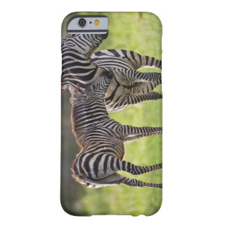 Africa. Tanzania. Common Zebra mother and baby Barely There iPhone 6 Case