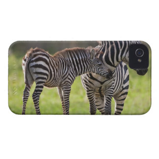 Africa. Tanzania. Common Zebra mother and baby iPhone 4 Cover