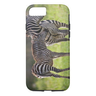 Africa. Tanzania. Common Zebra mother and baby iPhone 7 Case