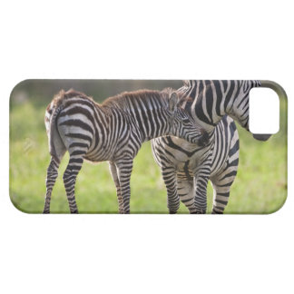 Africa. Tanzania. Common Zebra mother and baby iPhone SE/5/5s Case