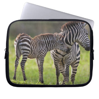 Africa. Tanzania. Common Zebra mother and baby Laptop Sleeves