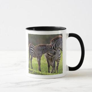Africa. Tanzania. Common Zebra mother and baby Mug
