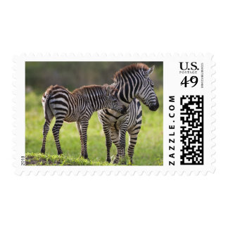 Africa. Tanzania. Common Zebra mother and baby Postage Stamp