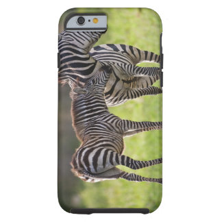 Africa. Tanzania. Common Zebra mother and baby Tough iPhone 6 Case