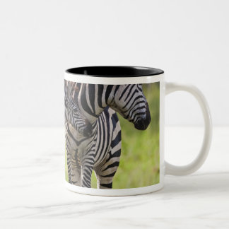 Africa. Tanzania. Common Zebra mother and baby Two-Tone Coffee Mug