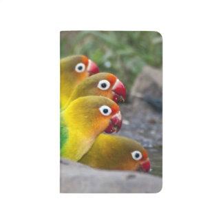 África. Tanzania. Consumición de los Lovebirds de Cuadernos Grapados