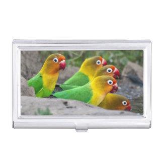 África. Tanzania. Consumición de los Lovebirds de Caja De Tarjetas De Presentación