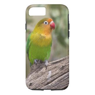 África. Tanzania. El Lovebird de Fischer en Ndutu Funda iPhone 7