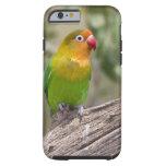 África. Tanzania. El Lovebird de Fischer en Ndutu Funda Resistente iPhone 6
