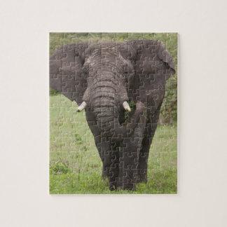 África. Tanzania. Elefante en el cráter de Ngorong Rompecabezas Con Fotos