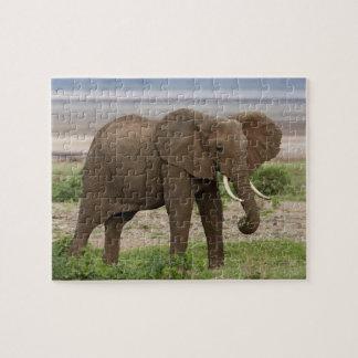 África. Tanzania. Elefante en el lago Manyara NP Puzzle Con Fotos