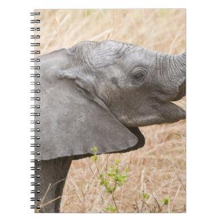 África. Tanzania. Elefante joven en Tarangire Libros De Apuntes Con Espiral