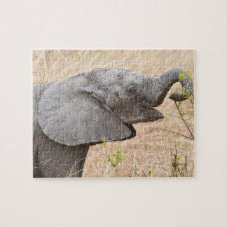 África. Tanzania. Elefante joven en Tarangire Rompecabeza Con Fotos