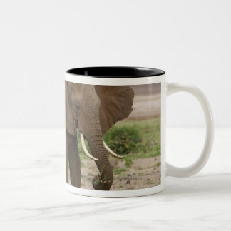 Africa. Tanzania. Elephant at Lake Manyara NP. Two-Tone Coffee Mug