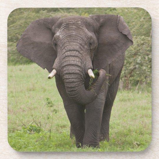 Africa. Tanzania. Elephant at Ngorongoro Crater, Coaster