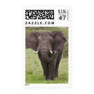 Africa. Tanzania. Elephant at Ngorongoro Crater, Postage