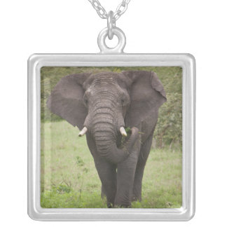 Africa. Tanzania. Elephant at Ngorongoro Crater, Silver Plated Necklace