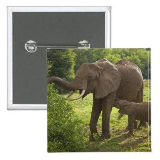 Africa. Tanzania. Elephant mother and calf at 2 Pinback Button