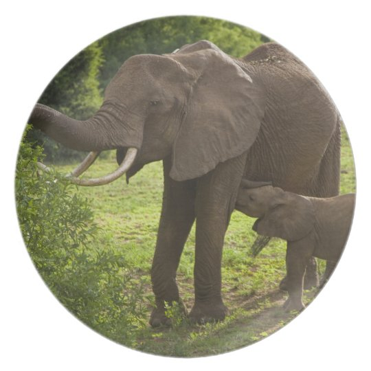 Africa. Tanzania. Elephant mother and calf at 2 Dinner Plate