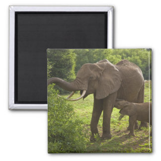 Africa. Tanzania. Elephant mother and calf at 2 Magnet