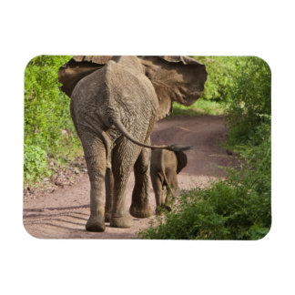 Africa. Tanzania. Elephant mother and calf at Magnet