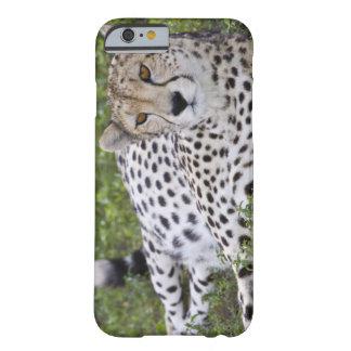 Africa. Tanzania. Female Cheetah at Ndutu in the Barely There iPhone 6 Case