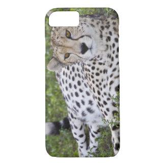 Africa. Tanzania. Female Cheetah at Ndutu in the iPhone 8/7 Case