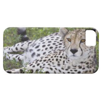 Africa. Tanzania. Female Cheetah at Ndutu in the iPhone SE/5/5s Case