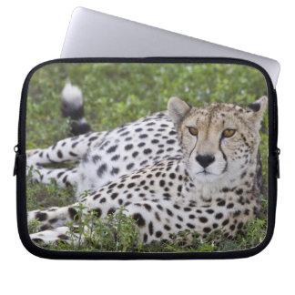 Africa. Tanzania. Female Cheetah at Ndutu in the Laptop Sleeves