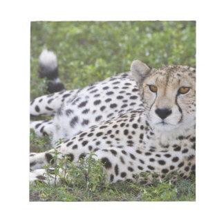Africa. Tanzania. Female Cheetah at Ndutu in the Notepad