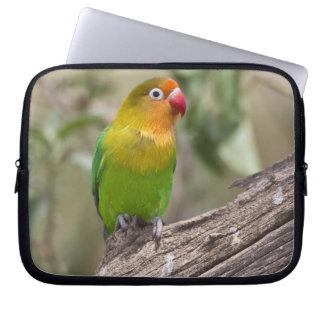 Africa. Tanzania. Fischer's Lovebird at Ndutu in Computer Sleeve