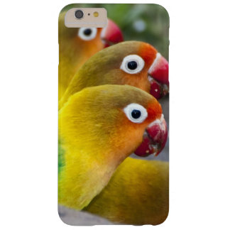 Africa. Tanzania. Fischer's Lovebirds drinking Barely There iPhone 6 Plus Case