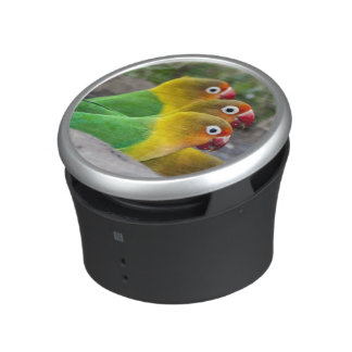 Africa. Tanzania. Fischer's Lovebirds drinking Bluetooth Speaker