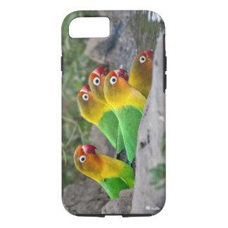 Africa. Tanzania. Fischer's Lovebirds drinking iPhone 8/7 Case