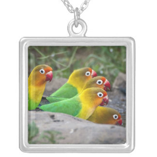 Africa. Tanzania. Fischer's Lovebirds drinking Square Pendant Necklace