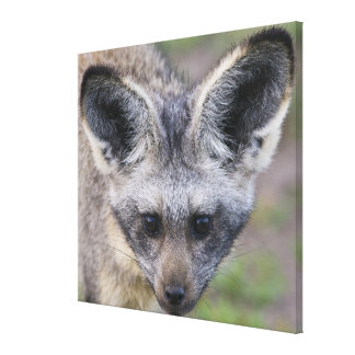 África. Tanzania. Fox Palo-Espigado en Ndutu en Lienzo Envuelto Para Galerias