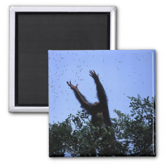Africa, Tanzania, Glitter reaches for flying 2 Inch Square Magnet
