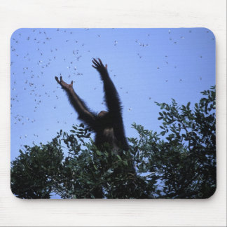 Africa, Tanzania, Glitter reaches for flying Mouse Pad