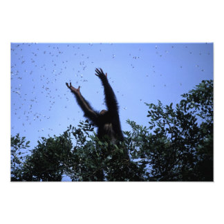 Africa, Tanzania, Glitter reaches for flying Photo Print