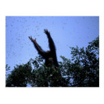 Africa, Tanzania, Glitter reaches for flying Postcard