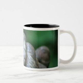 AFRICA, Tanzania, Gombe Nat'l Park, Male Two-Tone Coffee Mug