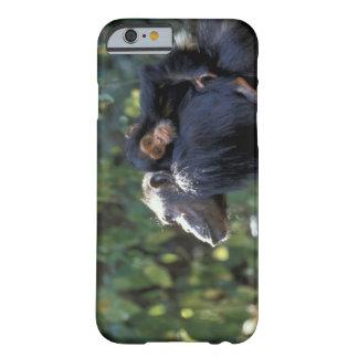 ÁFRICA, Tanzania, Gombe NP, chimpancés.  Femenino Funda De iPhone 6 Barely There