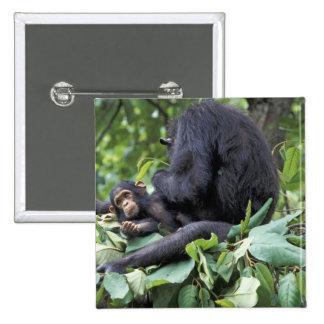 Africa, Tanzania, Gombe NP Female chimpanzee Pinback Button