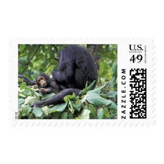 Africa, Tanzania, Gombe NP Female chimpanzee Postage