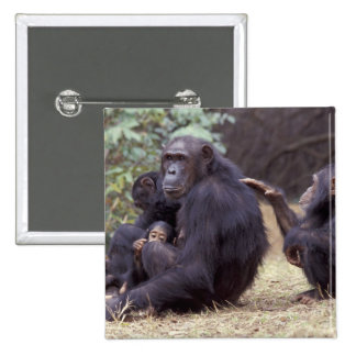 Africa, Tanzania, Gombe NP Infant female Pinback Button