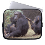 Africa, Tanzania, Gombe NP Infant female Laptop Sleeves