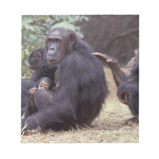 Africa, Tanzania, Gombe NP Infant female Note Pad